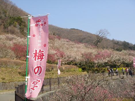 幕山公園(湯河原梅林)